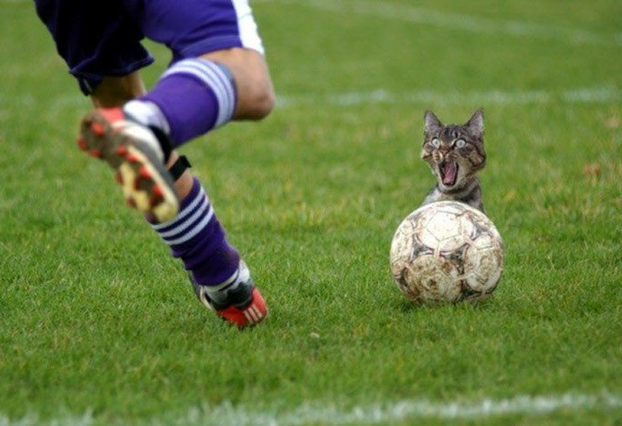 funny soccer. Cat and Soccer Match