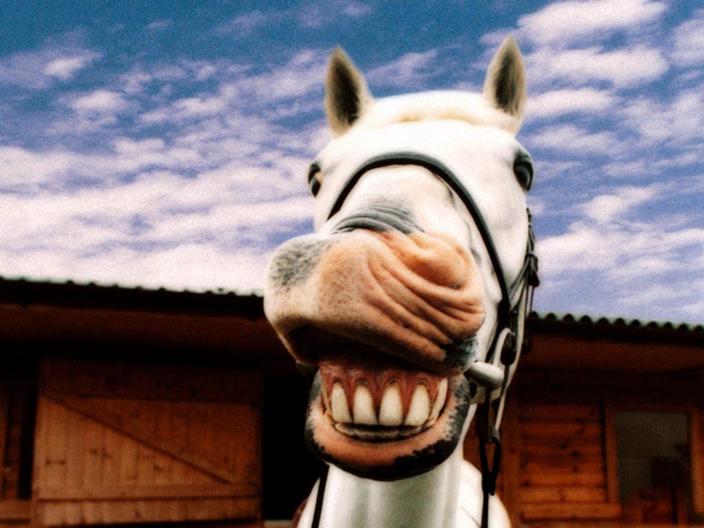 Uncategorized Smiling Horse smiling horse