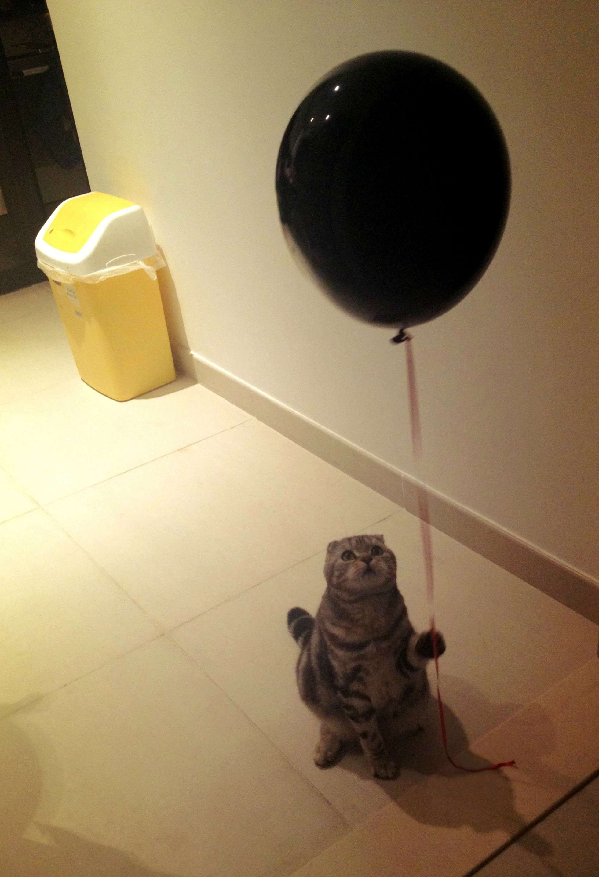 Cat with Ballon