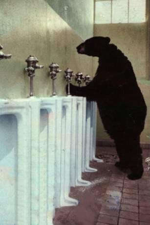 How Bear Pee