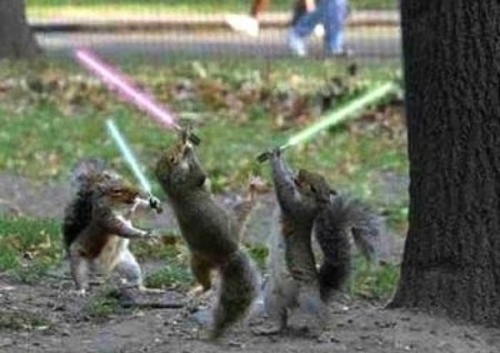 Squirrel Star Wars