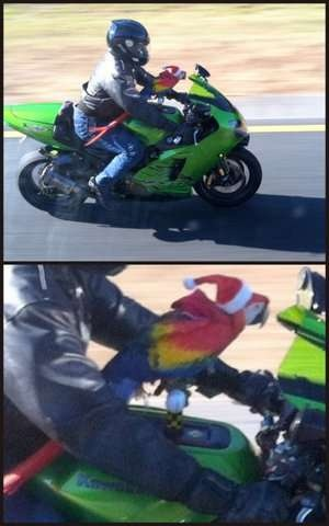 Motorcycle and Parrot
