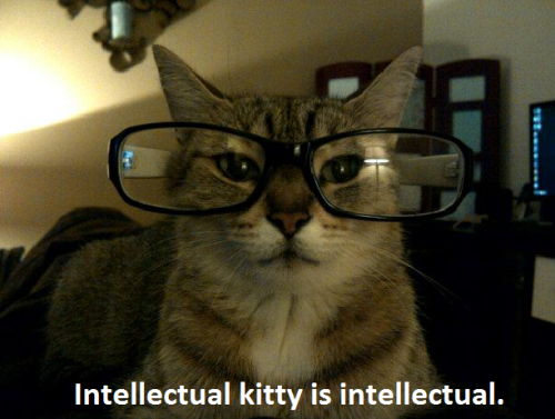 Intellectual Cat