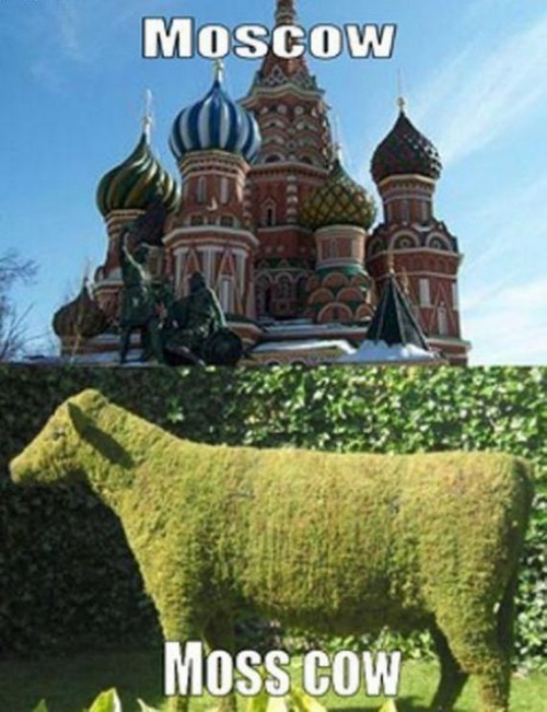 Moscow - Moss Cow